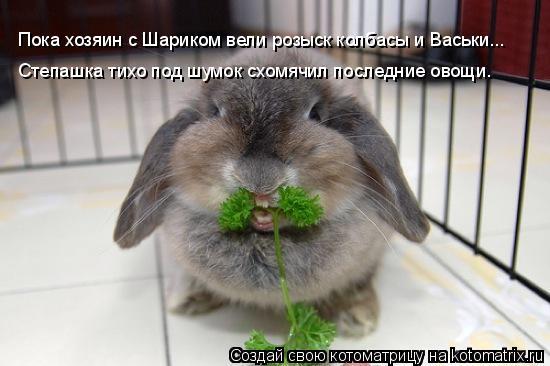 Котоматрица: Пока хозяин с Шариком вели розыск колбасы и Васьки... Степашка тихо под шумок схомячил последние овощи.