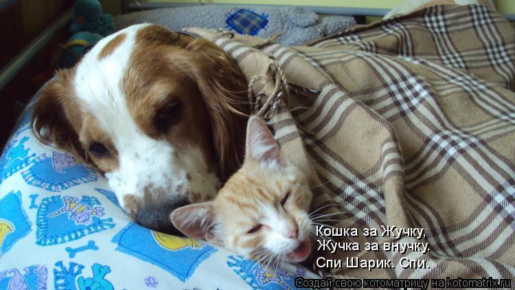 Котоматрица: Кошка за Жучку, Жучка за внучку. Спи Шарик. Спи.