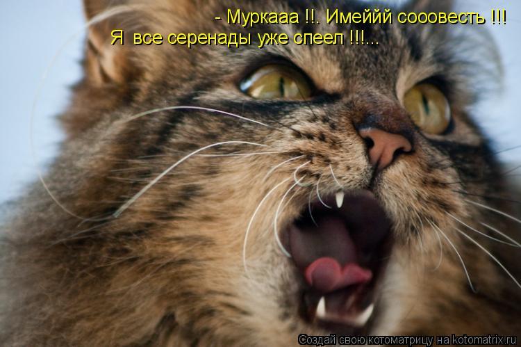 Котоматрица: - Муркаaa !!. Имеййй сооовесть !!! Я  все серенады уже спеел !!!...