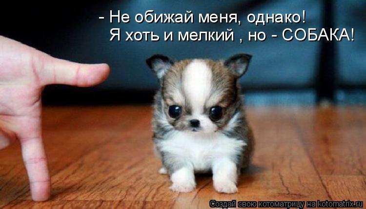 Котоматрица - Я хоть и мелкий , но - СОБАКА! - Не обижай меня, однако!