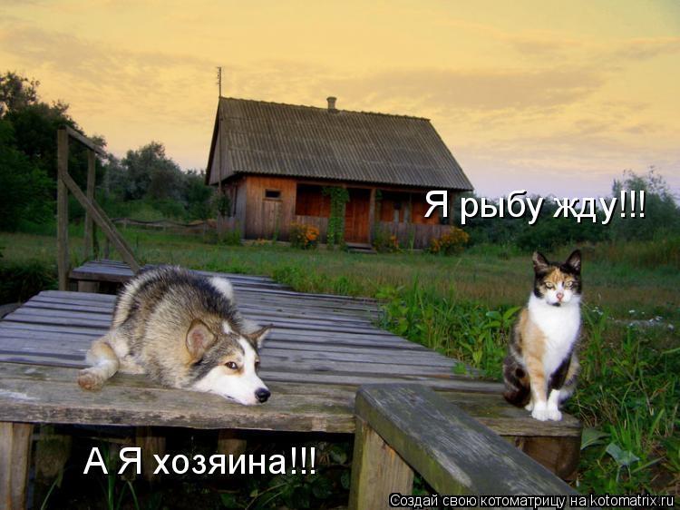 Котоматрица - Я рыбу жду!!! А Я хозяина!!!