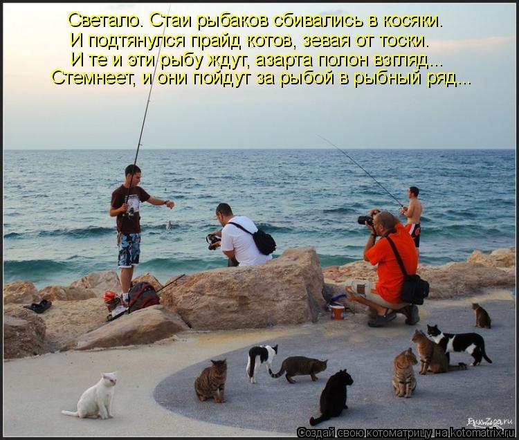 Котоматрица - Светало. Стаи рыбаков сбивались в косяки. И подтянулся прайд котов, зе