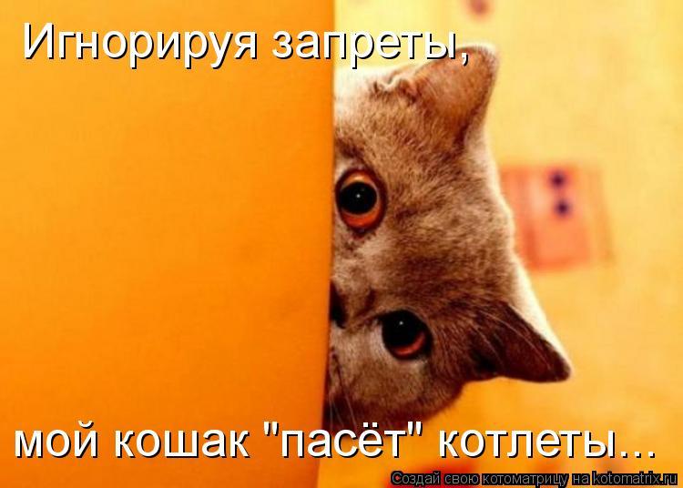 """Котоматрица - Игнорируя запреты, мой кошак """"пасёт"""" котлеты..."""
