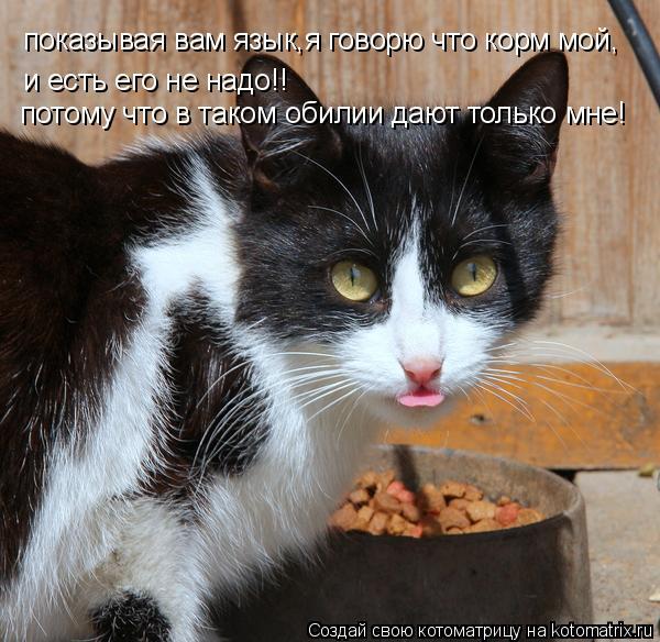 Котоматрица: показывая вам язык,я говорю что корм мой, и есть его не надо!! потому что в таком обилии дают только мне!