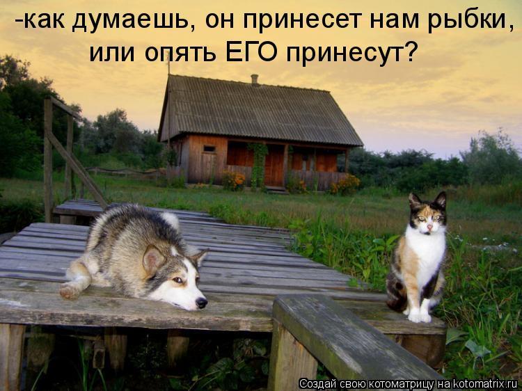 Котоматрица - -как думаешь, он принесет нам рыбки, или опять ЕГО принесут?
