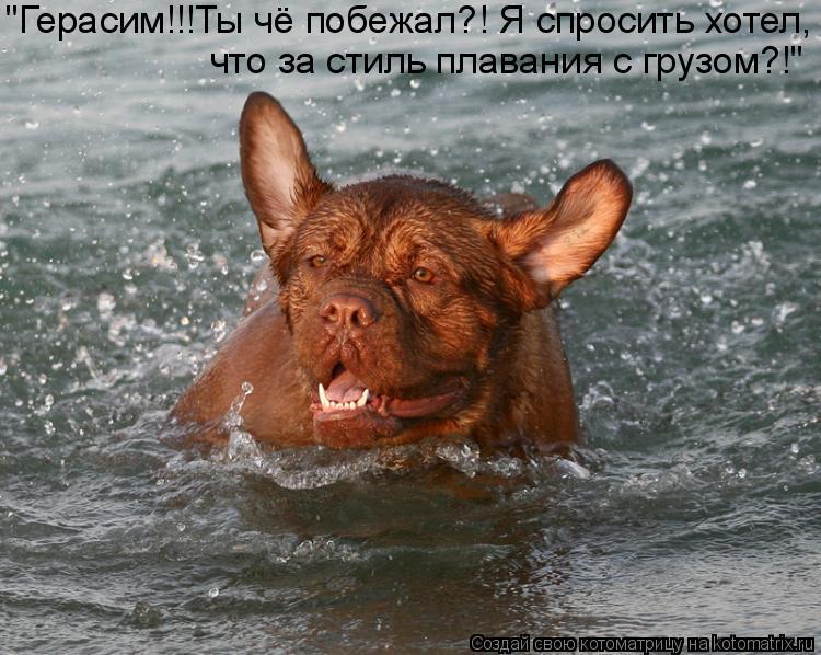 """Котоматрица: """"Герасим!!!Ты чё побежал?! Я спросить хотел, что за стиль плавания с грузом?!"""""""