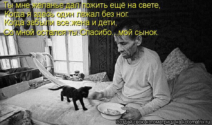 Котоматрица - Ты мне желанье дал пожить ещё на свете, Когда я здесь один лежал без н
