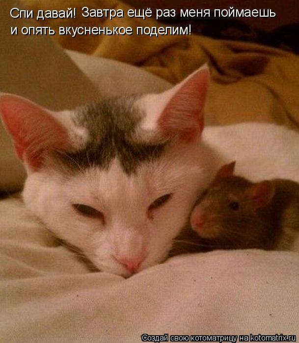 Котоматрица: Спи давай!  Завтра ещё раз меня поймаешь  и опять вкусненькое поделим!