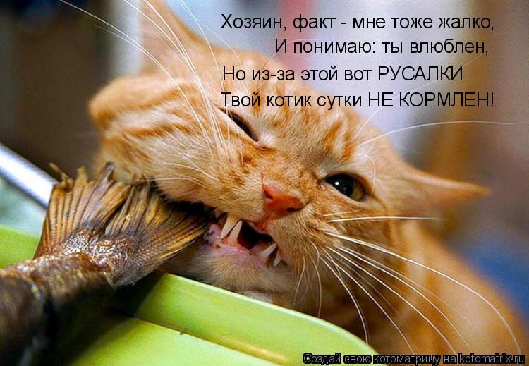 Котоматрица: Хозяин, факт - мне тоже жалко, И понимаю: ты влюблен, Но из-за этой вот РУСАЛКИ Твой котик сутки НЕ КОРМЛЕН!