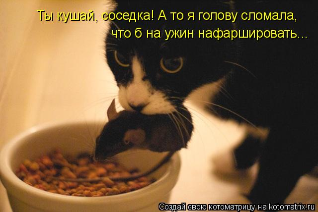 Котоматрица: Ты кушай, соседка! А то я голову сломала, что б на ужин нафаршировать...