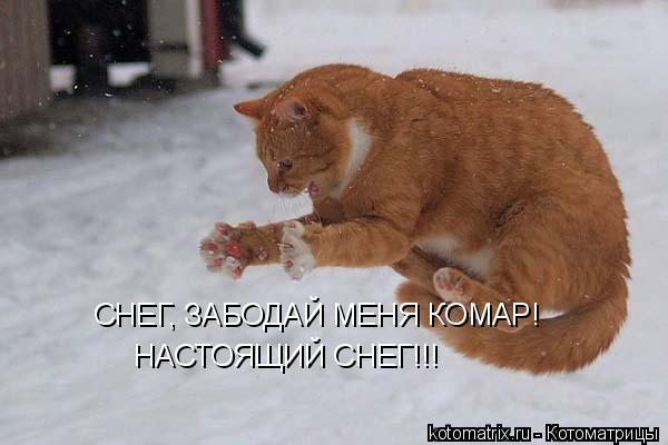 http://kotomatrix.ru/images/lolz/2011/08/13/968872.jpg
