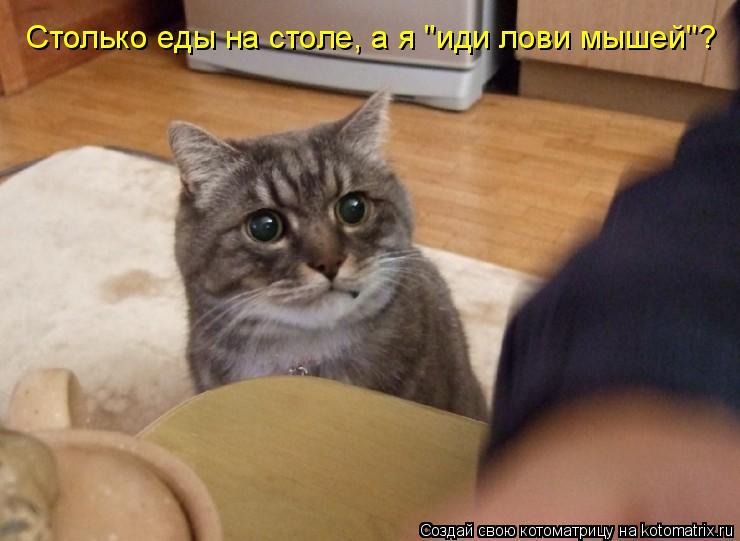 """Котоматрица: Столько еды на столе, а я """"иди лови мышей""""?"""