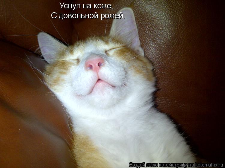 Котоматрица: Уснул на коже, С довольной рожей.