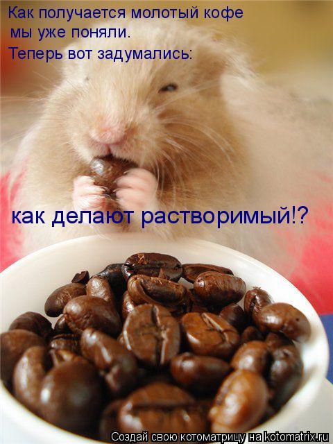 Котоматрица - Как получается молотый кофе  мы уже поняли.  Теперь вот задумались:  к
