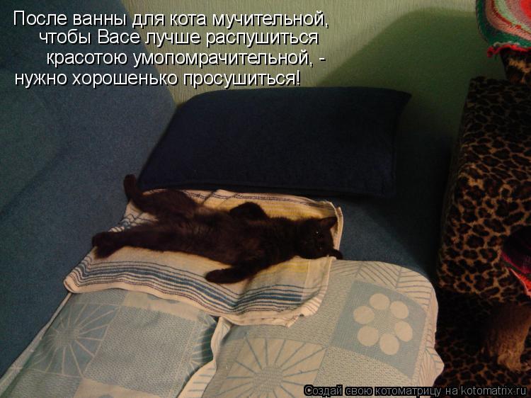 Котоматрица: После ванны для кота мучительной, чтобы Васе лучше распушиться красотою умопомрачительной, -  нужно хорошенько просушиться!