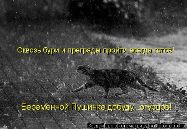 Котоматрица: Сквозь бури и преграды пройти всегда готов! Беременной Пушинке добуду...огурцов!