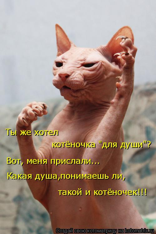 Котоматриця!)))) - Страница 8 969198