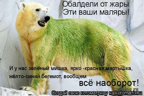 Котоматрица: Обалдели от жары Эти ваши маляры! И у нас зелёный мишка, ярко -красная мартышка,  жёлто-синий бегемот, вообщем  всё наоборот!