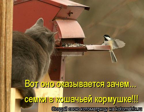 Котоматрица: Вот оно оказывается зачем... семки в кошачьей кормушке!!!