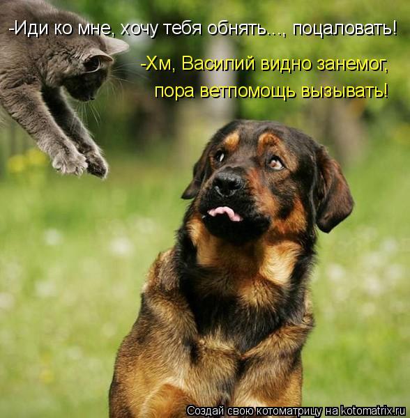 Котоматрица: -Иди ко мне, хочу тебя обнять..., поцаловать! -Хм, Василий видно занемог,  пора ветпомощь вызывать!