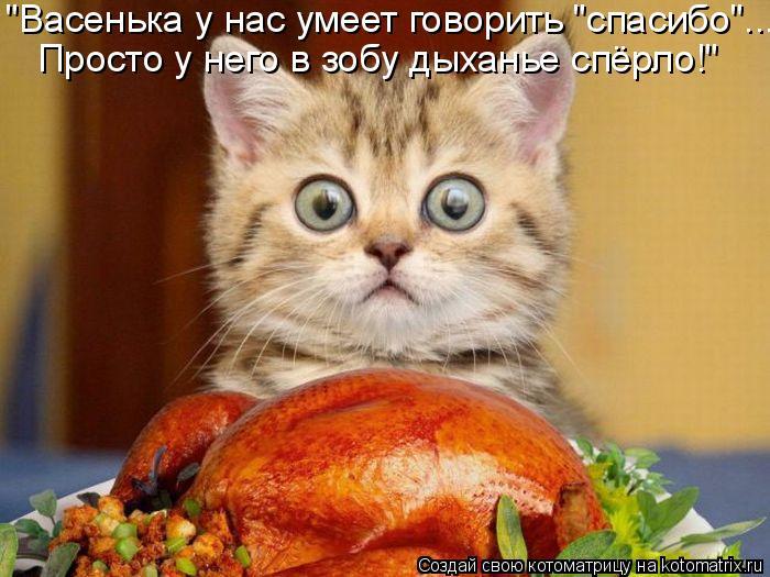"""Котоматрица: """"Васенька у нас умеет говорить """"спасибо""""... Просто у него в зобу дыханье спёрло!"""""""