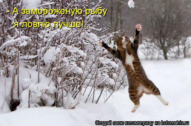 Котоматрица: - А замороженую рыбу  я ловлю лучше!..