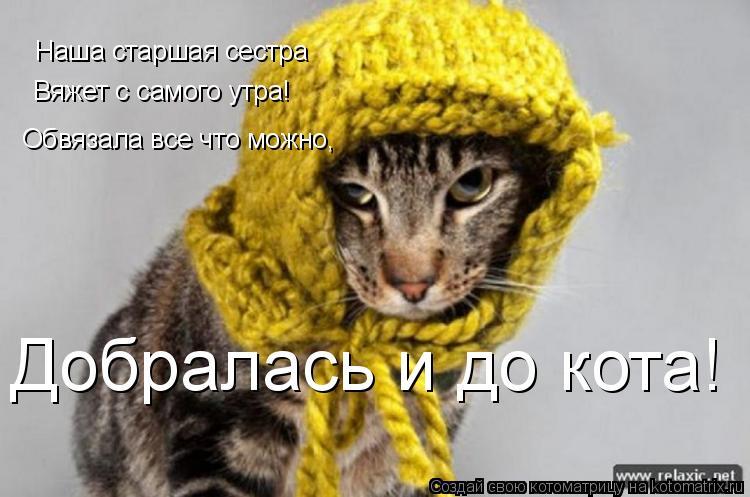 Котоматрица: Наша старшая сестра Вяжет с самого утра! Обвязала все что можно, Добралась и до кота!
