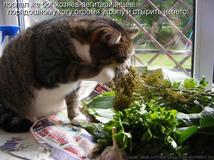Котоматрица: послал же бог хозяев-вегитарианцев. порядошному коту окромя укропу и стырить нечего!