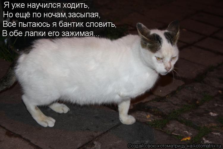 Котоматрица: Я уже научился ходить, Но ещё по ночам,засыпая, Всё пытаюсь я бантик словить, В обе лапки его зажимая...