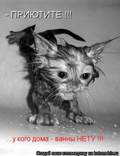 Котоматрица: - ПРИЮТИТЕ !!! ...у кого дома - ванны НЕТУ !!!