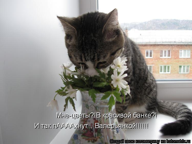 Котоматрица: Мне-цветы?!В красивой банке?! И так пААААхнут... Валерьянкой!!!!!!