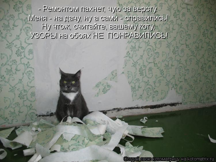 Котоматрица: - Ремонтом пахнет, чую за версту. Меня - на дачу, ну а сами - справились! Ну чтож, считайте, вашему коту, УЗОРЫ на обоях НЕ  ПОНРАВИЛИСЬ!