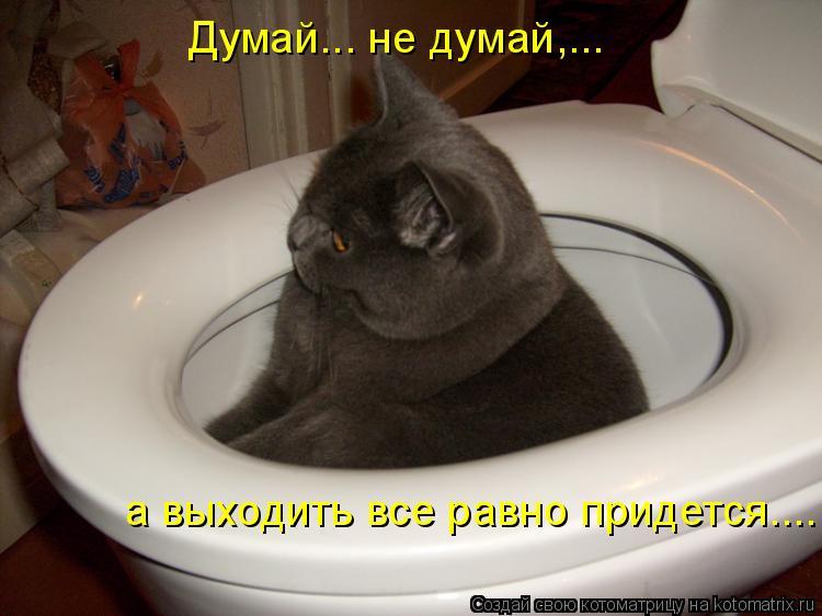 Котоматрица - Думай... не думай,...  а выходить все равно придется....
