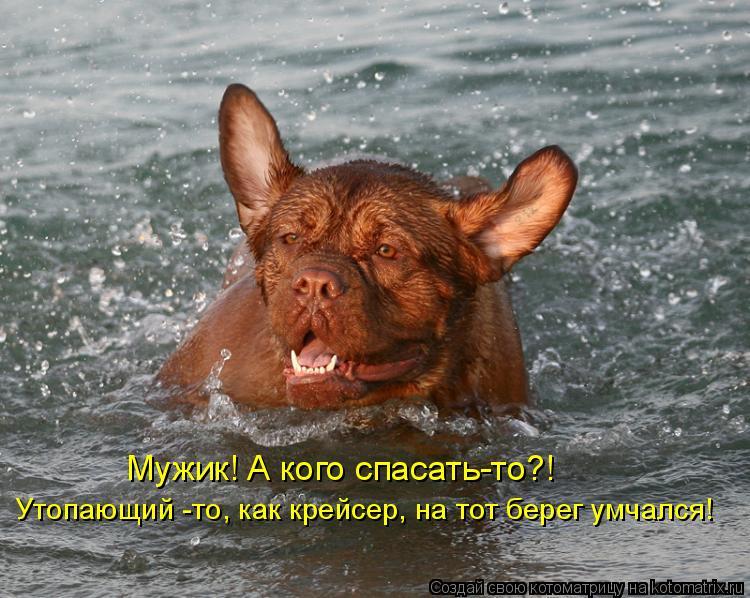 Котоматрица: Мужик! А кого спасать-то?! Утопающий -то, как крейсер, на тот берег умчался!