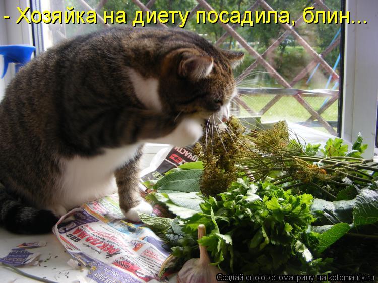 Котоматрица: - Хозяйка на диету посадила, блин...