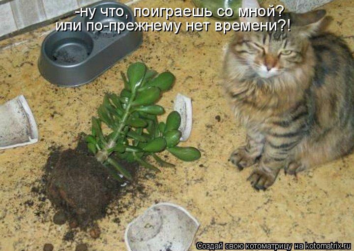 -ну что, поиграешь со мной? или по-прежнему нет времени?!