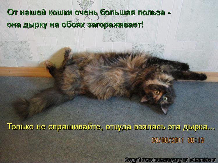 Котоматрица: От нашей кошки очень большая польза - она дырку на обоях загораживает! Только не спрашивайте, откуда взялась эта дырка...