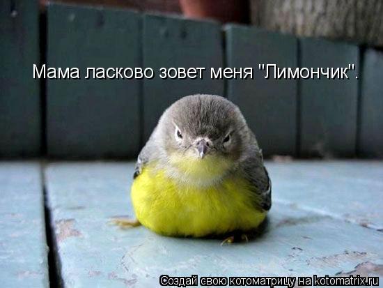 "Котоматрица: Мама ласково зовет меня ""Лимончик""."