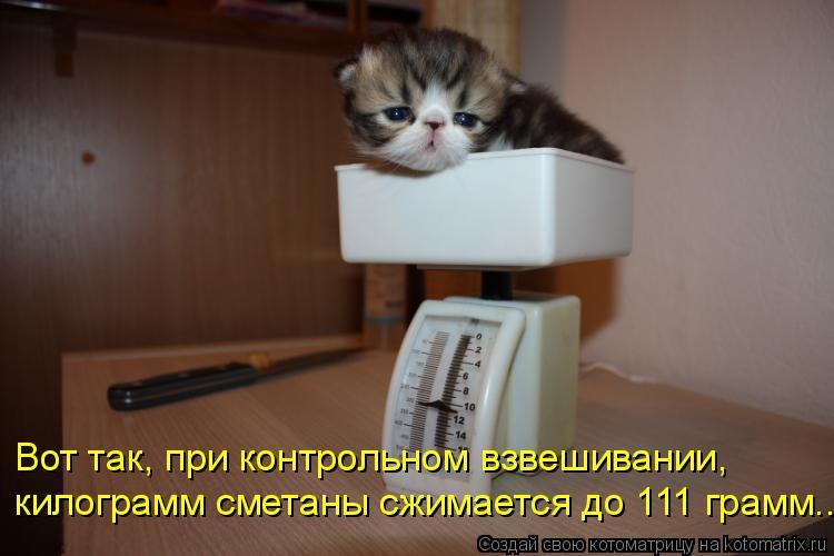 Котоматрица: Вот так, при контрольном взвешивании,  килограмм сметаны сжимается до 111 грамм...
