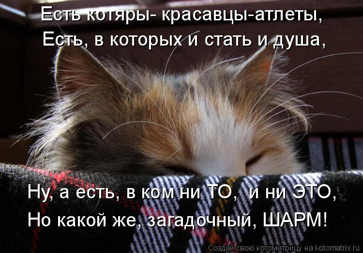 Котоматрица: Есть котяры- красавцы-атлеты, Есть, в которых и стать и душа,  Ну, а есть, в ком ни ТО,  и ни ЭТО, Но какой же, загадочный, ШАРМ!
