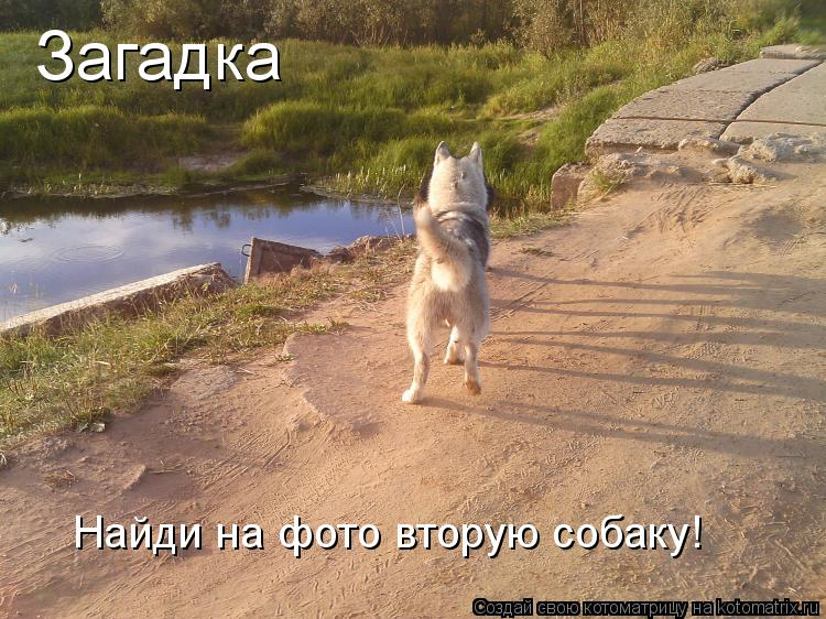 Котоматрица: Загадка Найди на фото вторую собаку!