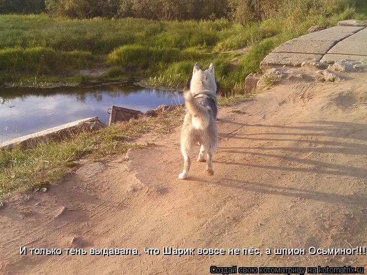 Котоматрица: И только тень выдавала, что Шарик вовсе не пёс, а шпион Осьминог!!!