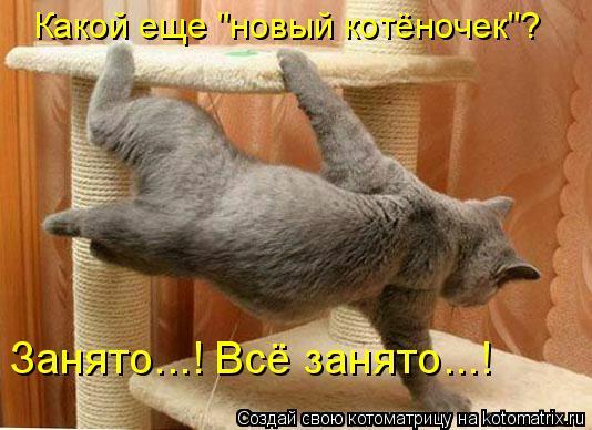 """Котоматрица: Какой еще """"новый котёночек""""?  Занято...! Всё занято...!"""