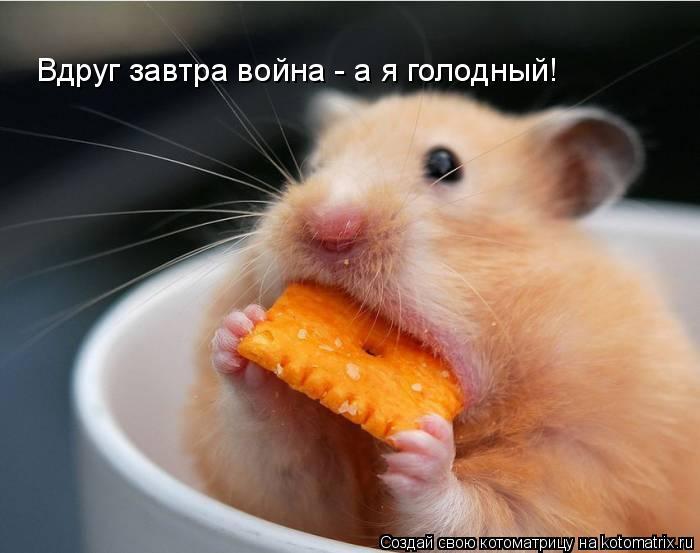 Котоматрица: Вдруг завтра война - а я голодный!