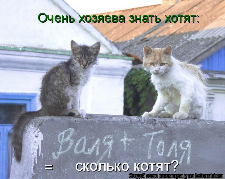 Котоматрица: =  сколько котят? Очень хозяева знать хотят: