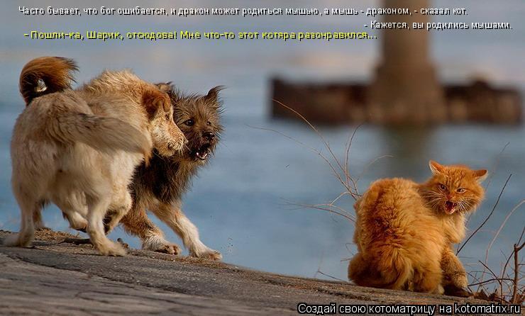 Котоматрица: Часто бывает, что бог ошибается, и дракон может родиться мышью, а мышь - драконом, - сказал кот.  - Кажется, вы родились мышами. - Пошли-ка, Шарик,