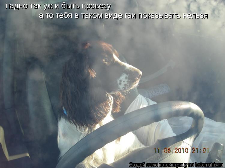Котоматрица: ладно так уж и быть провезу  а то тебя в таком виде гаи показывать нельзя