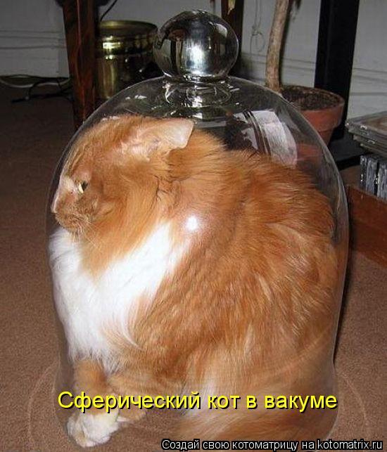 Котоматрица: Сферический кот в вакуме