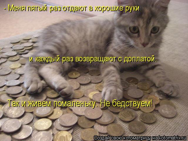 Котоматрица: - Меня пятый раз отдают в хорошие руки и каждый раз возвращают с доплатой. Так и живем помаленьку. Не бедствуем!