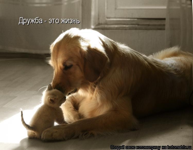 Котоматрица: Дружба - это жизнь